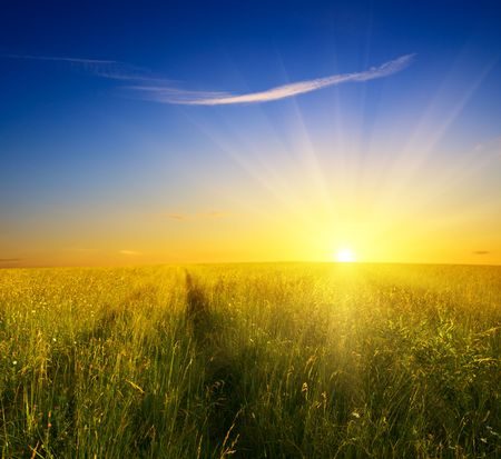 field of grass and sunset Stock Photo - 4703809