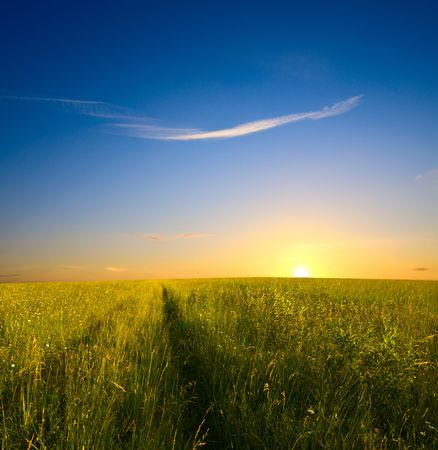 field of grass and sunset Stock Photo - 4736309