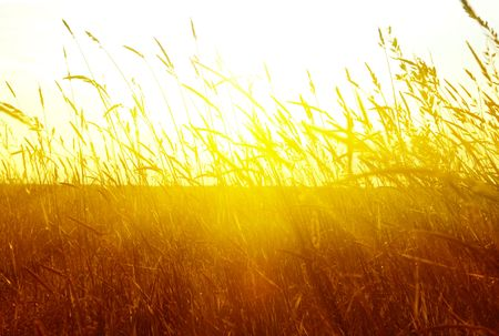 field of grass and sunset Stock Photo - 4827200