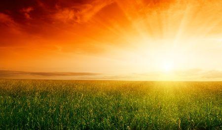 puesta de sol: campo de hierba y la puesta de sol de verano Foto de archivo
