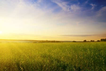 field of summer grass and sunset Stock Photo - 4827216