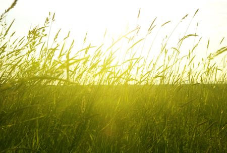 field of summer grass and sunset Stock Photo - 4852518
