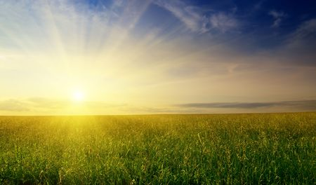 field of summer grass and sunset Stock Photo - 4852524