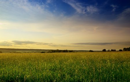 field of summer grass and sunset Stock Photo - 4852526