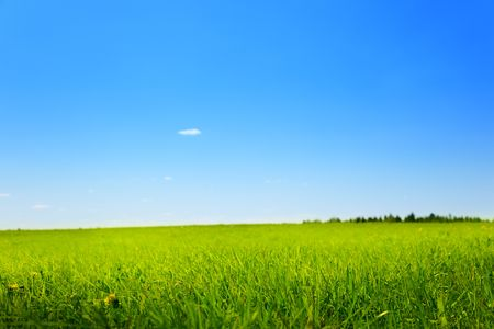field of spring grass (shallow DOF) Stock Photo - 5055545