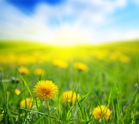 spring dandelions and sunny day Stock Photo - 5055556