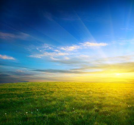 gebied van de lente gras en zonsondergang