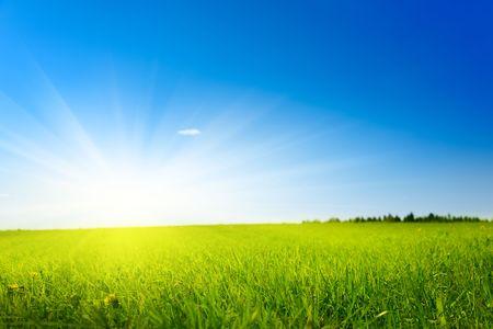 field of spring grass (shallow DOF) Stock Photo - 5097399