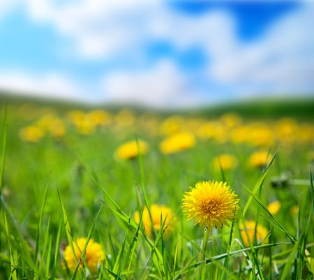 spring dandelions and sunny day Stock Photo - 5097403