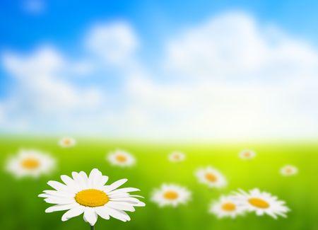 field of daisy (shallow DOF) Stock Photo - 5097405