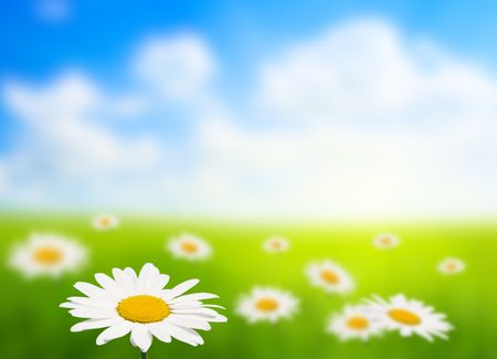 field of daisy (shallow DOF) photo