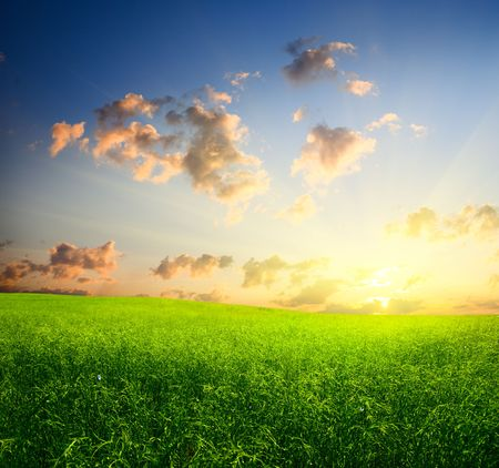 field of grass and sunset Stock Photo - 5097394