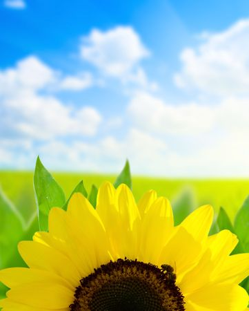sunflower and perfect day Stock Photo - 5132246