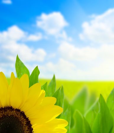 sunflower and perfect day Stock Photo - 5132248