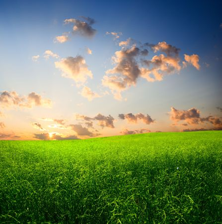 field of grass and sunset Stock Photo - 5132262