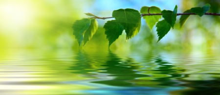 birch: leaves of birch and water