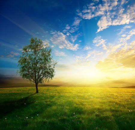 春の草と日没のフィールド