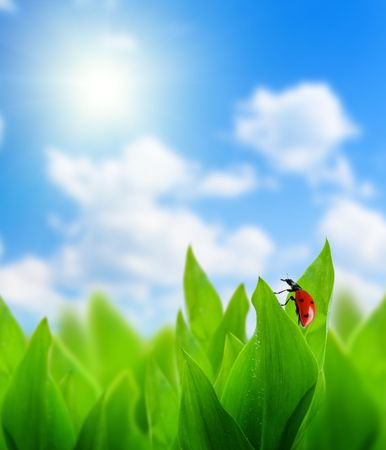 green grass and perfect day Stock Photo - 5191029