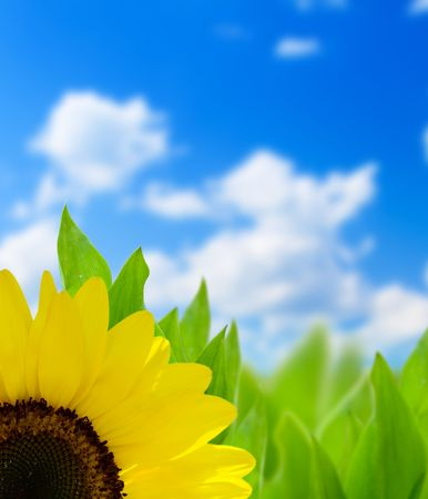 sunflower and perfect day Stock Photo - 5190991