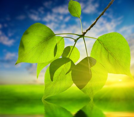 sunset and leaves of poplar Stock Photo - 5224646