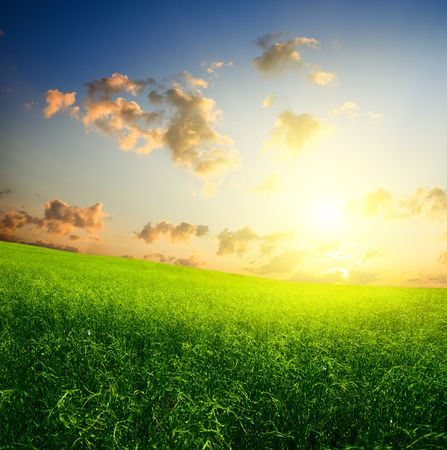 field of grass and sunset Stock Photo - 5257609