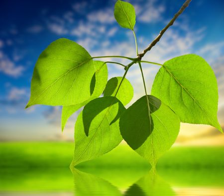 sunset and leaves of poplar Stock Photo - 5316942