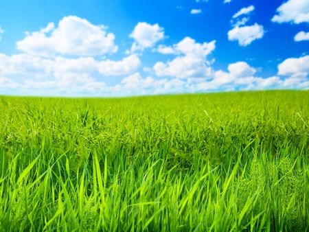 field of spring grass (shallow DOF) Stock Photo - 5320168