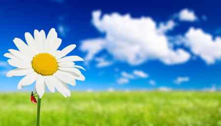 field of daisies and perfect sky Stock Photo - 5320167
