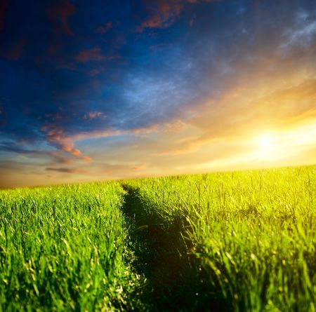 way in grass and sunset Stock Photo - 5367599