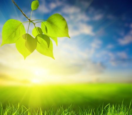 wschód słońca: pole trawy i liści topoli (płytkie DOF)