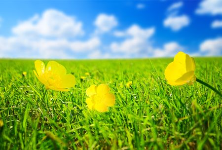 spring flowers sunny day Stock Photo - 5378897