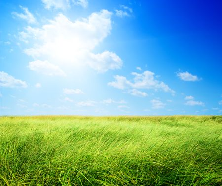 field of grass (shallow DOF) Stock Photo - 5378886
