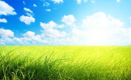 field of grass (shallow DOF) Stock Photo - 5378928