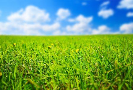 field of spring grass (shallow DOF) Stock Photo - 5406103