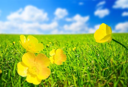 spring flowers sunny day Stock Photo - 5406111