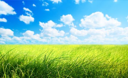 field of grass (shallow DOF) Stock Photo - 5406104