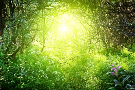 national forest: sunny day in deep forest