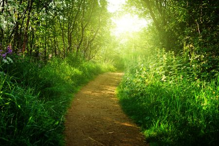 road in deep forest Stock Photo - 5406131