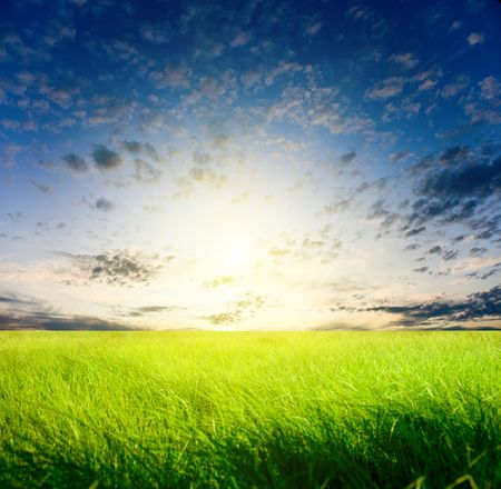 field of grass and sunset Stock Photo - 5420111