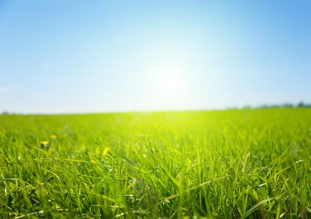 spring green field of grass Stock Photo - 5474775