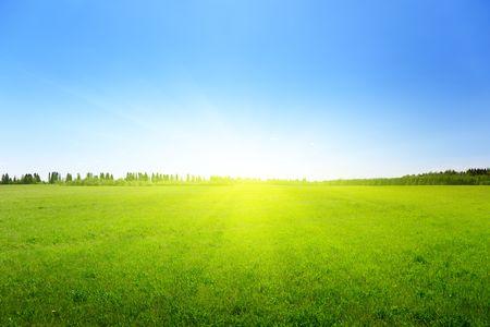 spring green field of grass photo