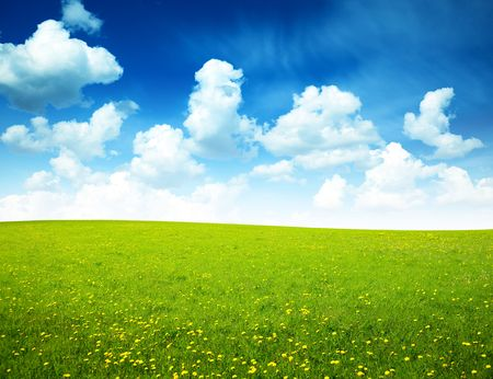 field of spring flowers and perfect sky Stock Photo - 5523420