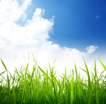 green grass and cloudy sky Stock Photo - 5523422