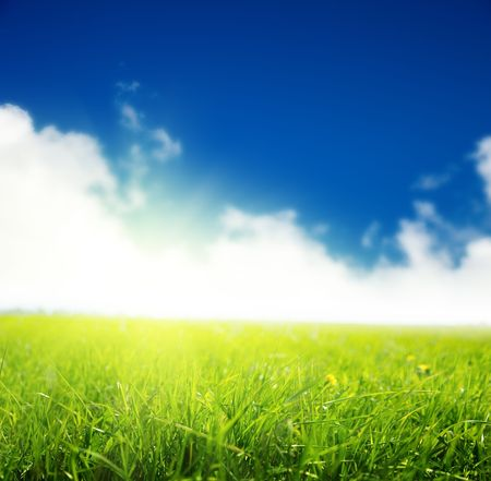 spring green field of grass Stock Photo - 5568936