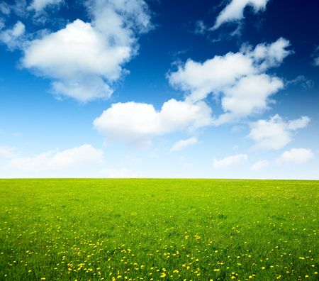 field of spring flowers and perfect sky Stock Photo - 5568934