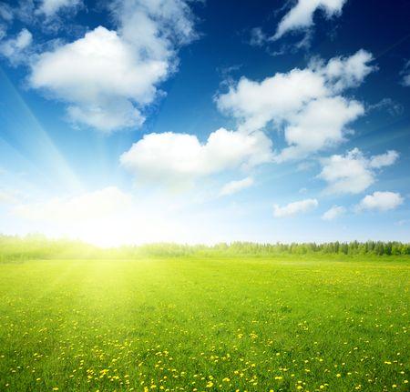 wild grass: campo de flores de primavera y perfecto cielo Foto de archivo