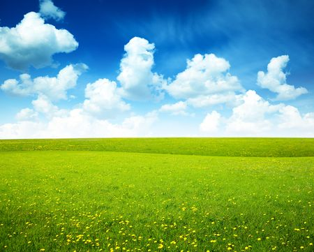field of spring flowers and perfect sky Stock Photo - 5568932