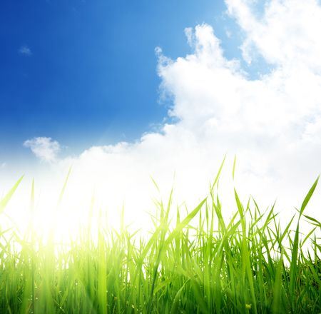 green grass and cloudy sky Stock Photo - 5568904