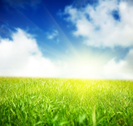 spring green field of grass Stock Photo - 5568902