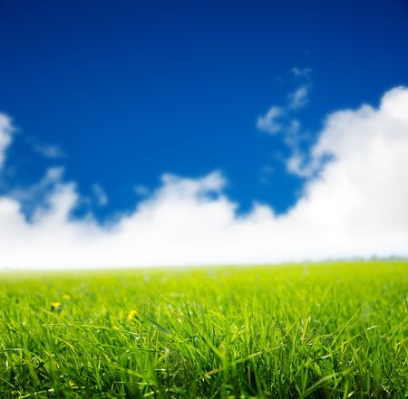 spring green field of grass Stock Photo - 5600839